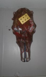Hand painted real cow skull