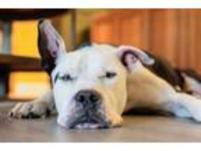Craigslist - Animals and Pets for Adoption Classifieds in Astor