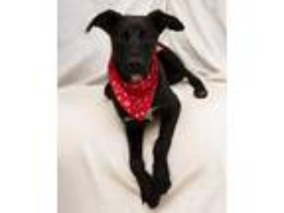Adopt Junior a Black Mixed Breed (Medium) / Mixed dog in Cartersville