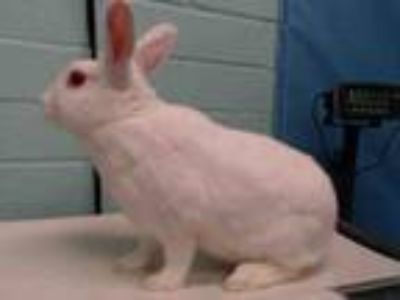 Adopt RUBY a Bunny Rabbit