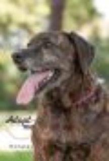 Parsley Plott Hound Dog