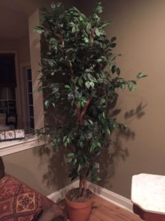 Very tall (6ft +) faux house plant