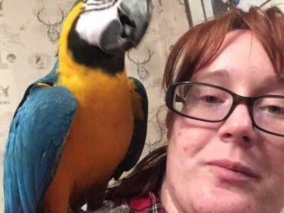 Home Trained Male Amd Female macow parrots For Sale Now Ready To Go Home.