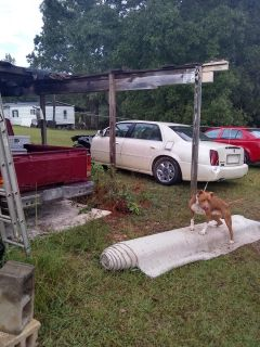 Clear title 2001 DTS Cadillac cranks and runs great need front clip but everything works!!