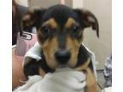 Adopt Snoopy a Hound (Unknown Type) / Mixed dog in Birmingham, AL (25637115)