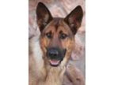 Adopt * Liz von Litzendorf a German Shepherd Dog
