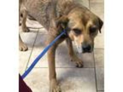 Adopt Theo a Tan/Yellow/Fawn Mixed Breed (Medium) / Mixed dog in St.