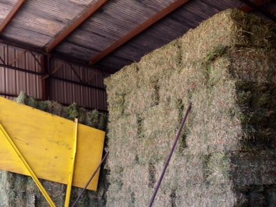 Alfalfa Hay First Quality