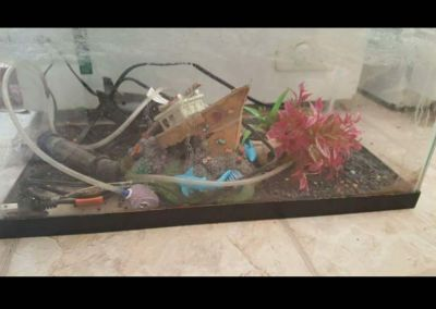 10 gallon tank no lid sold as is
