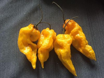 Ghost peppers 4-$1