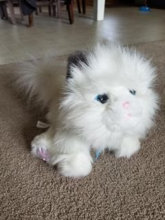 Little Live Pets Battery Operated Cat $3