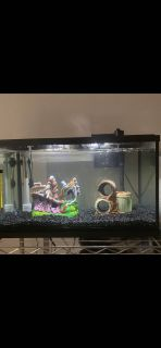 Complete set up aquarium fish tank