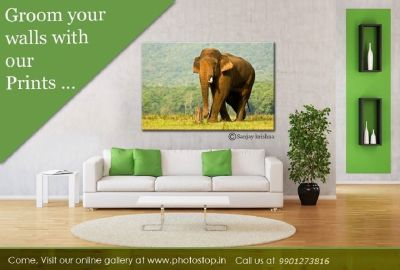 Gallery Wrapped Canvas Prints For Artists and Photographers - Photostop.in