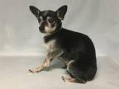 Adopt Sincere a Mixed Breed (Small) / Mixed dog in New York, NY (25634523)