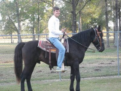 9Yr TW Gelding for Sale or Trade for a Quarter Horse Gelding