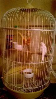 4 canary's