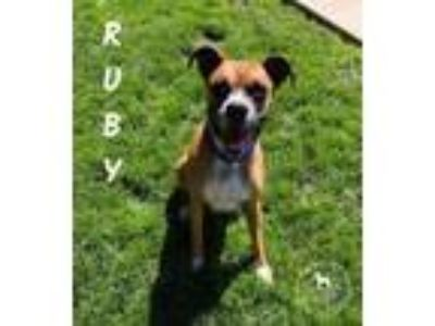Adopt Ruby a Boxer
