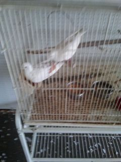 2 Doves and a cage