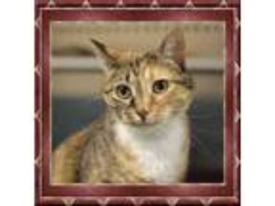 Adopt Sadie a Domestic Medium Hair