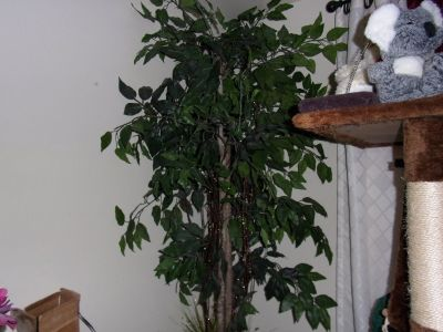 Nearly Natural 6 ft Sakaki Ficus Faux Silk ARTIFICAL PLANT TREE in Pot