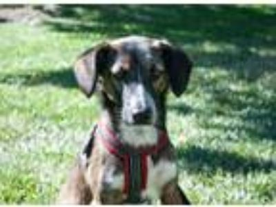 Adopt Missy a Mixed Breed