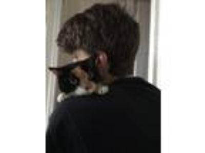 Adopt Roxanne a Tortoiseshell Calico cat in Philadelphia, PA (25844459)
