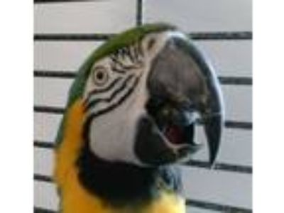 Adopt Max a Macaw