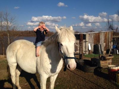 White gelding kid friendly horse