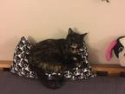 Adopt Penny a Domestic Shorthair / Mixed (short coat) cat in Philadelphia
