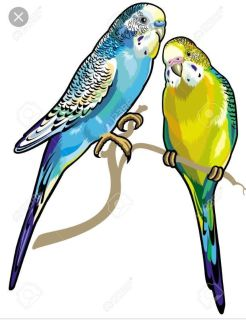 Any interest in 2 FREE Parakeets including cage & food