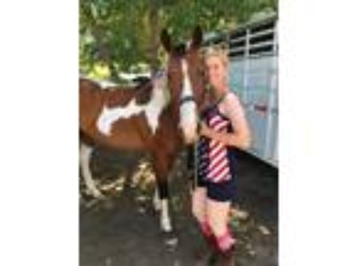 Special Paint Mare for sale