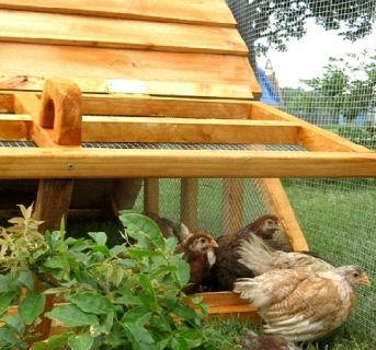ON SALE- Beautiful Affordable Chicken Coops Hen Houses for Lancaster, PA area