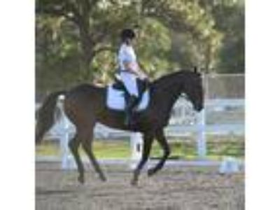 Thoroughbred Mare for sale Price Reduced