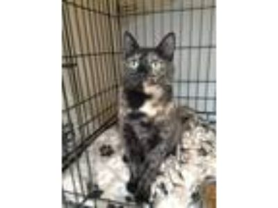 Adopt Carnation a Domestic Shorthair / Mixed cat in Ledgewood, NJ (25061253)