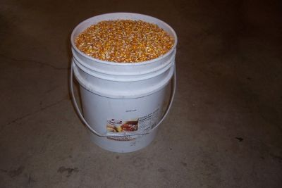 5 GALLON BUCKETS OF FEED CORN