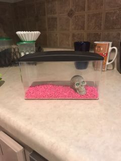 Small fish tank with fish food, stones and skull.