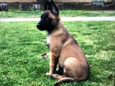 Puppy - Dogs for Adoption Classifieds in Fontana, California