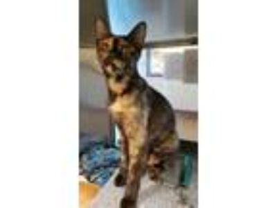 Adopt Augusta a All Black Domestic Shorthair / Domestic Shorthair / Mixed cat in