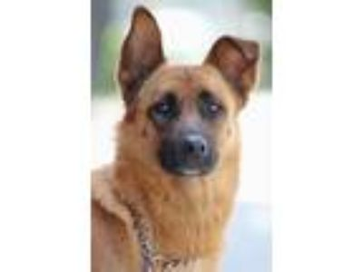 Adopt *Lucy von Lobbach a German Shepherd Dog