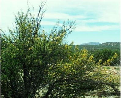 $17,900, 38 acre tract - only $242month terms - Mtn Views