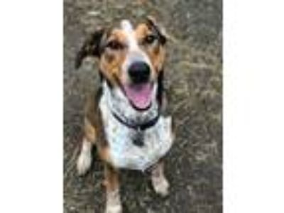 Adopt Nellie a Hound, Cattle Dog