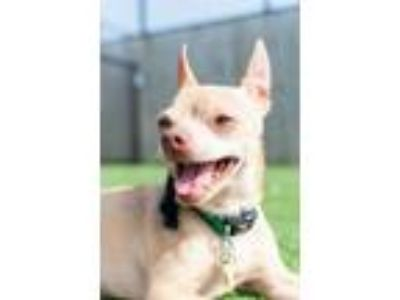 Adopt Grover a Mixed Breed