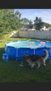 14' x 2 1/2' pool with pump