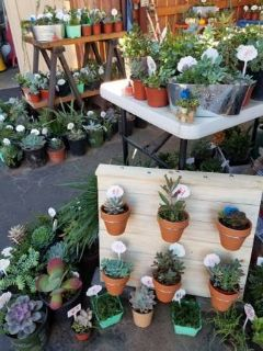 Good variety of low priced succulents and arrangements