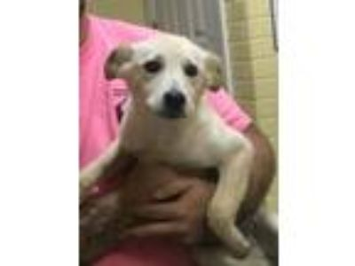 Adopt max man a Mixed Breed (Medium) / Mixed dog in Dyersburg, TN (25359340)