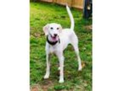 Adopt Oliver Beaufort a Pointer