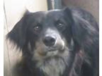 Adopt Edith a Border Collie