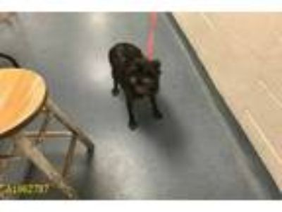 Adopt a Black Cairn Terrier / Mixed dog in West Palm Beach, FL (25353590)