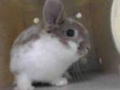 Adopt THERAPY a Bunny Rabbit