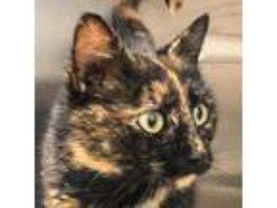 Adopt Peach a Tortoiseshell Domestic Shorthair cat in Chatham, VA (24536838)